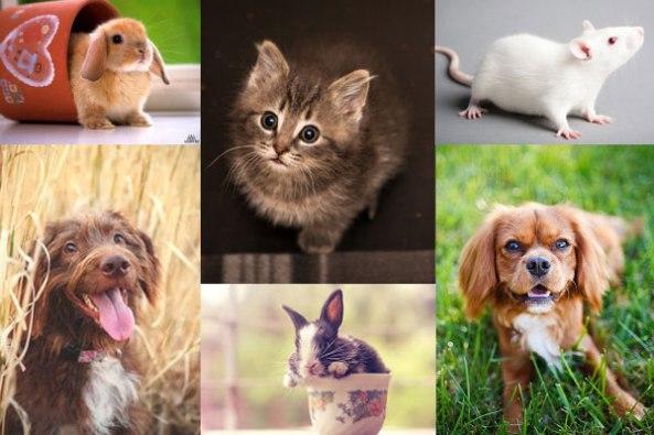 pet-animals-photographers